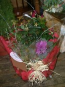 Rose plant basket